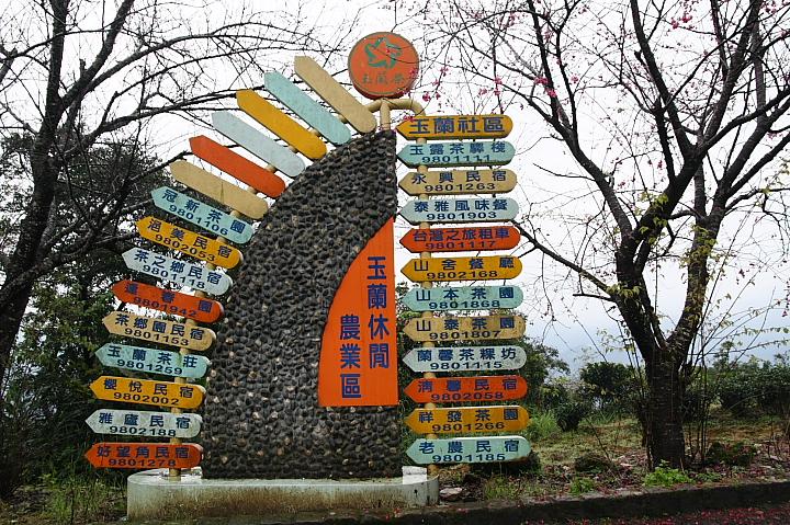 玉蘭茶園櫻花0027