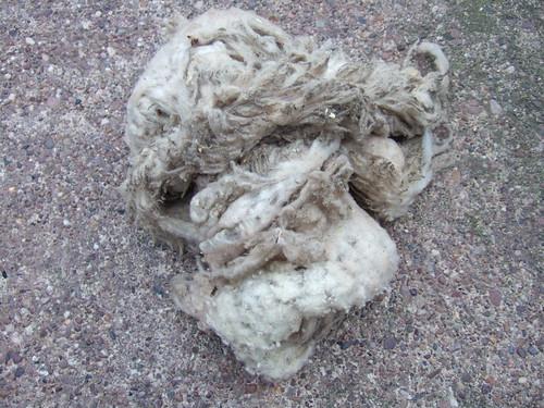 small shetland fleece