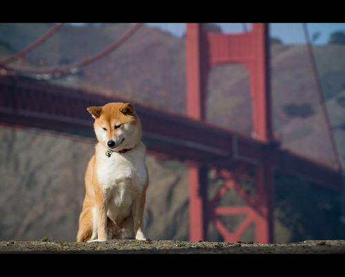 Suki and the Bridge