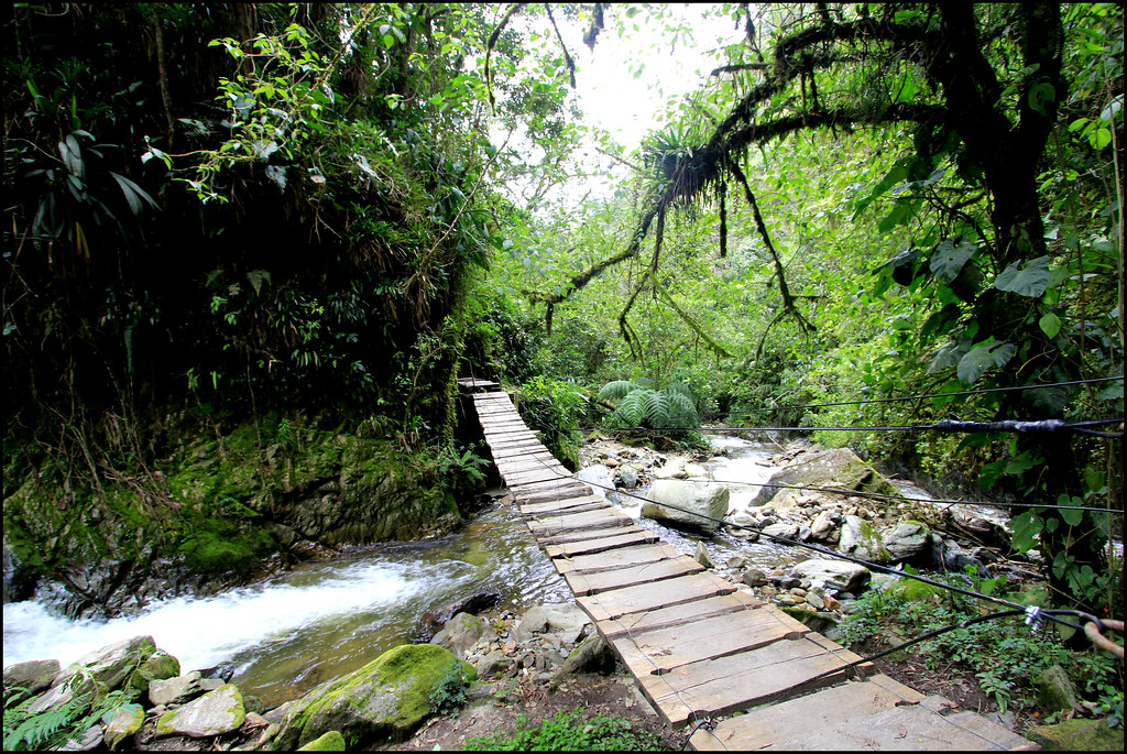 Imagen de un Cruce sobre el Rio Quindio en el Valle de Cocora