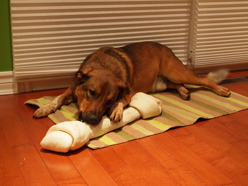 Denny and his big bone