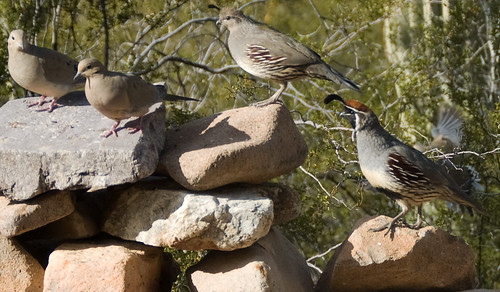 bird party