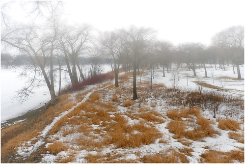 trees winter snow canada lumix day winnipeg manitoba explore redriver 1000views cans2s fz35