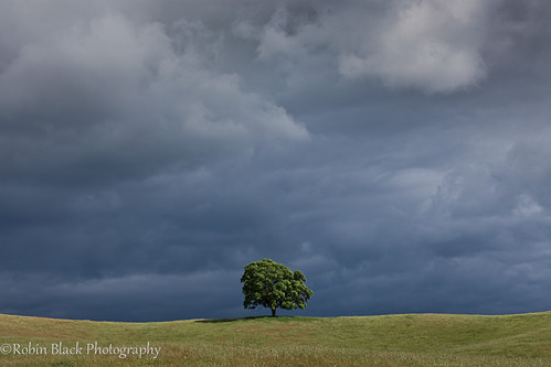 foothills storm tree clouds dark landscape oak ominous ngc surreal magritte sierra hills lone minimalism minimalist naturesbest nationalgeographic chaparral cecinestpasunepipe thetreacheryofimages outdoorphotographer canon5dmarkii robinblackphotography