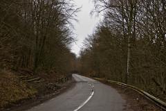 Route en forêt (N865)
