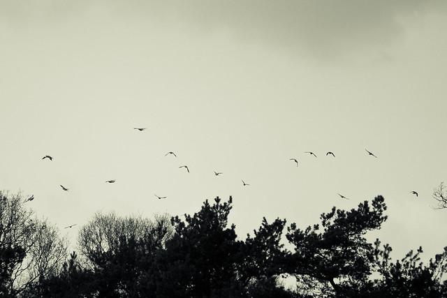 Fly Birdie fly!