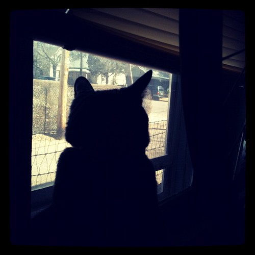 Window #marchphotoaday #day8