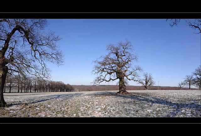amazing oaks