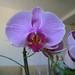 20120310_orkideak eta landareak-7