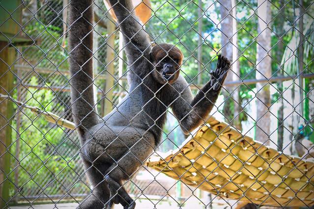 Parque Chico Mendes - macaco