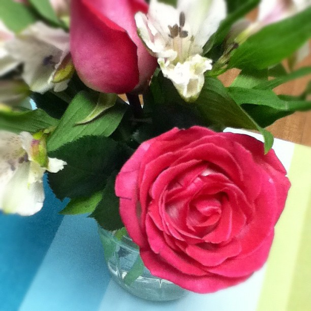 Trying to make fresh flowers a habit. One of those small luxuries I want to squeeze into the budget. :)
