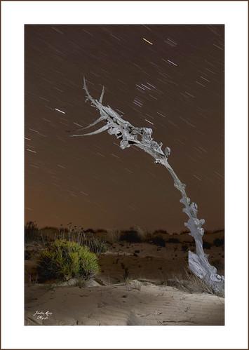 nocturna sobre cruces en Doñana-1