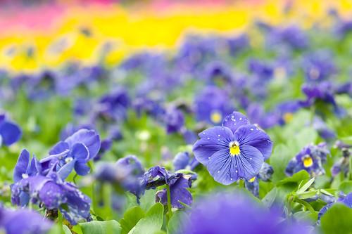 不過五彩繽紛的花堆在一起的確令人心曠神怡