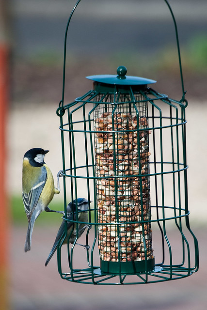 170312_ tits at the feeder no2