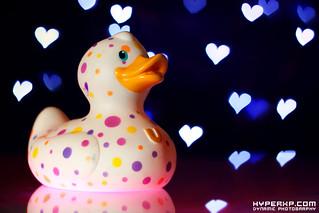 Bud Ducks (3)