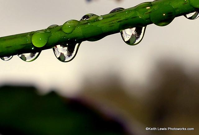 Rain Dropplets