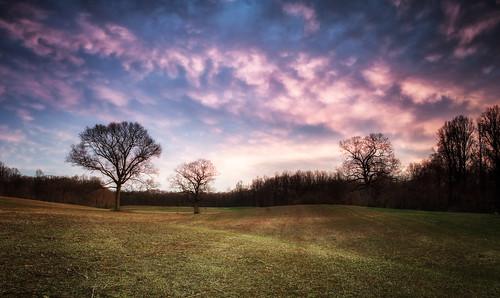 trees sunset sky ny tree field clouds evening spring longisland caumsettstatepark lloydharbor