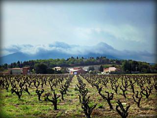 La vigne, le village et les nuages