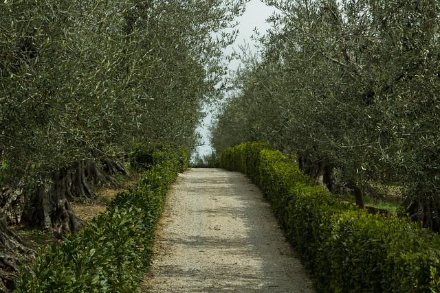 Umbria - Italian Countryside