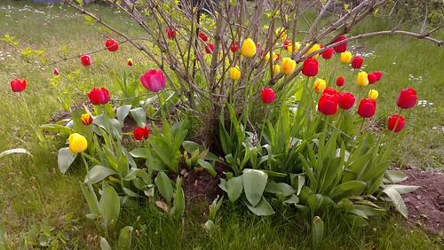 Im April'schen Garten