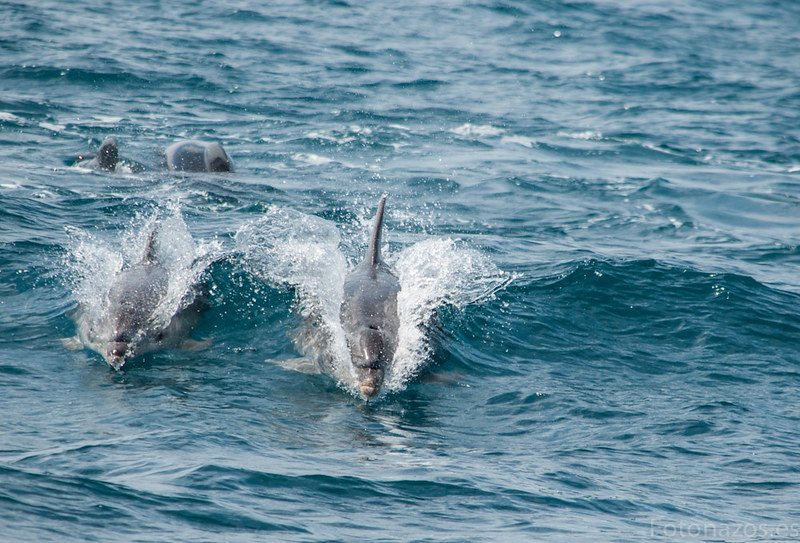 Paseo en barco y avistamiento de cetáceos en la bahía de Mazarrón