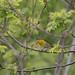 Matthew Sabatine has added a photo to the pool:ebird.org/ebird/view/checklist?subID=S29815443