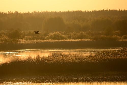bird water sunrise delta