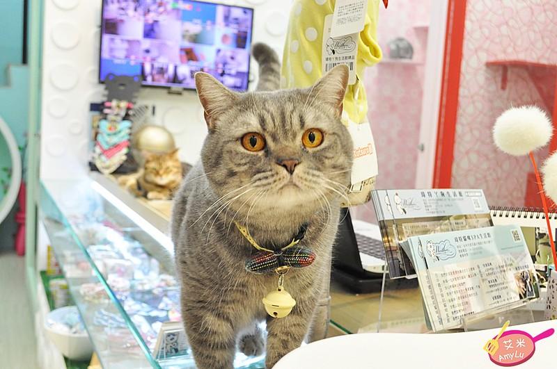 瑋特店貓-台中貓旅館瑋特
