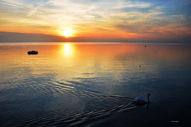 Sunset...il cigno