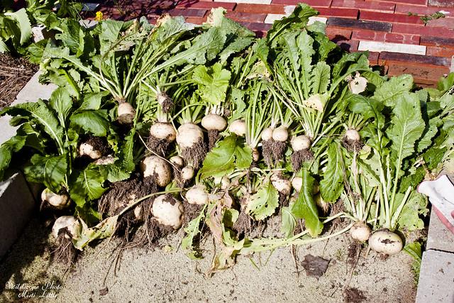 turnips7