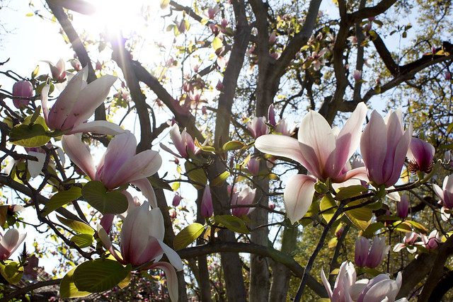 spring flowers in LA