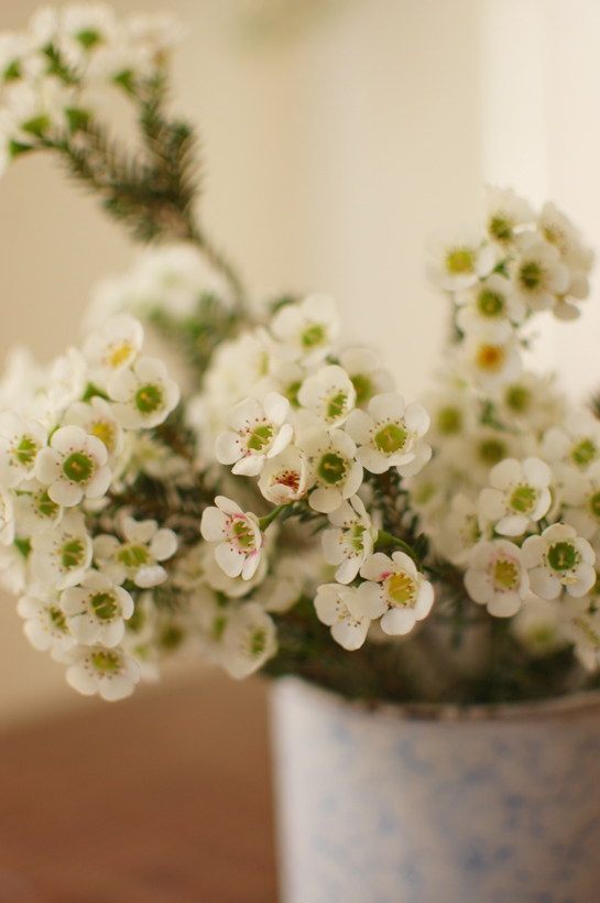 flowers are nice