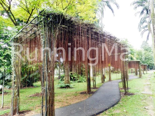 Singapore Botanic Gardens 06
