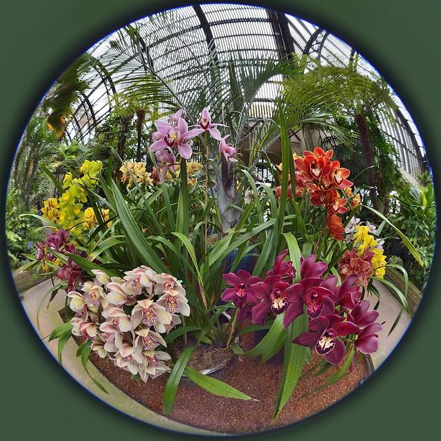 circular orchids nikon nikkor 8mm 2.8 f/2.8 fisheye