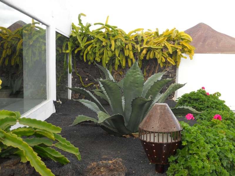 Jardines exteriores Fundacion Cesar Manrique 1