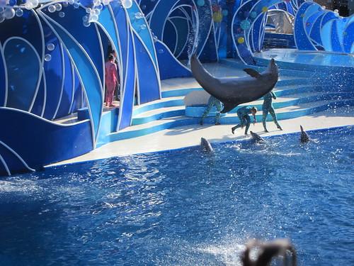 Crazy dolphin show
