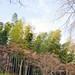 Arashiyama 嵐山 - 19