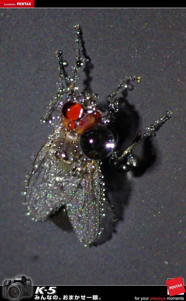 水晶蒼蠅...蒼蠅的眼淚