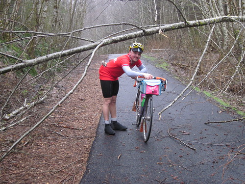 Downed trees on the Banks Vernonia Trail