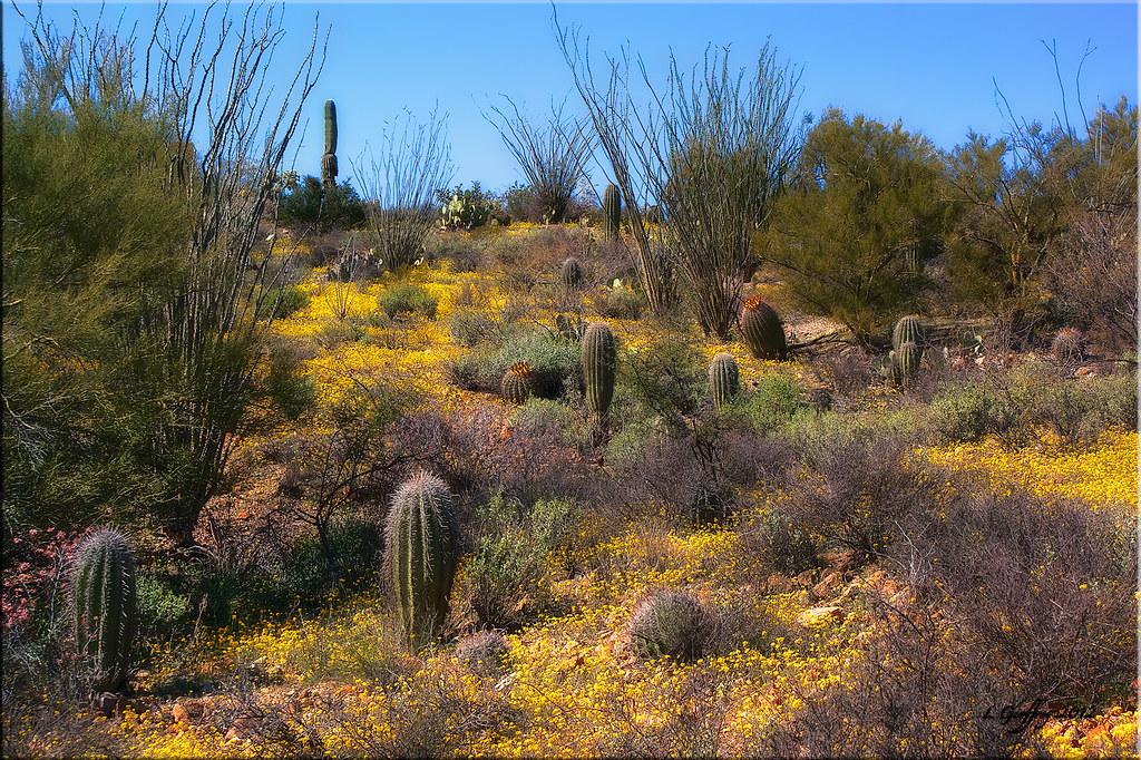 Tucson Moon Rock >> Elevation of Tortolita, AZ, USA - Topographic Map - Altitude Map