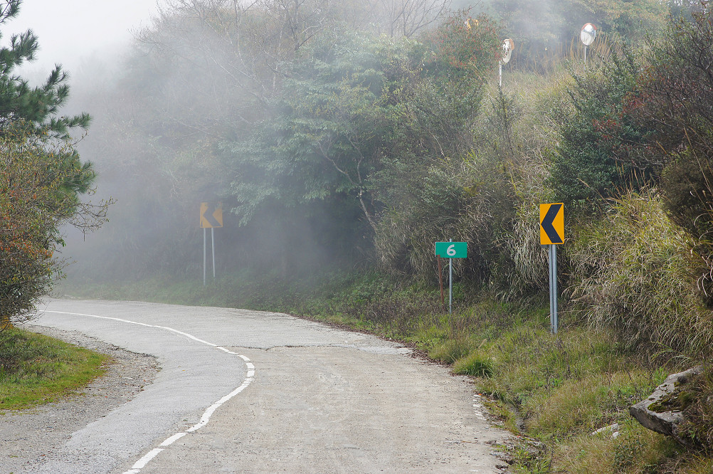 觀霧巨木步道-068