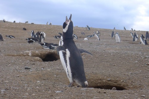 Punta Arenas-104