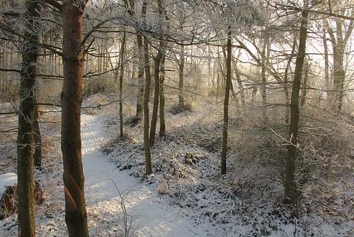 D woods 11 02 12