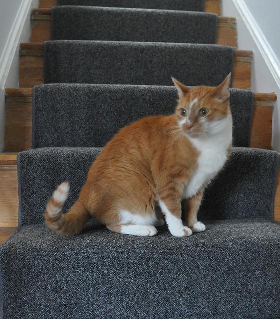 stairway carpet runner