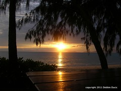 Sunrise in Palm Cove Paradise