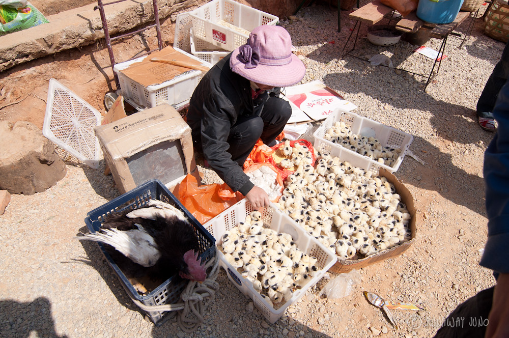 Chicks for sale in Shaxi Market