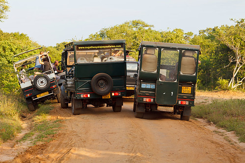 Rush hour@Yala National Park