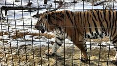 20120219 calgary zoo - 10