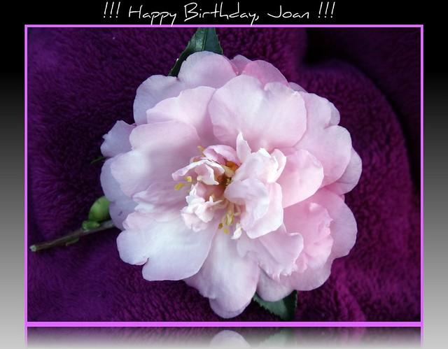 Happy Birthday Joan Cake Ideas And Designs