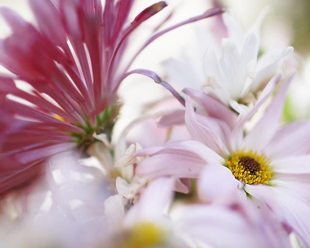 flowers7edit
